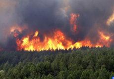 Incendies forets 1