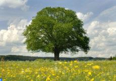 arbre copier