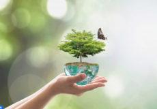 biodiversite-energies-renouvelables-800x490-copier