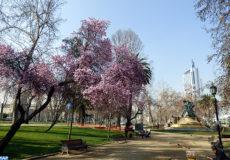 Parc Forestier Santiago Chili-MAPECOLOGY