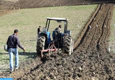 Agriculture, opération de labour, tracteur, semis  (Plaine du Saïss 17 :12 :16 )