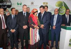 Le ministre de l'Agriculture de la Pêche maritime, du Développement rural et des Eaux et Forêts, Aziz Akhannouch, a présidé, mardi (21/11/17) à Ouezzane, la cérémonie d'ouverture de la 2ème édition du Festival national de l'olivier qui se tient du 21 au 24 novembre courant.