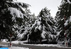 La ville d'Ifrane (1650 m d'altitude) se retrouvait, dimanche (19/12/16), à l'instar d'autres petites localités avoisinantes, revêtue d'un impressionnant manteau de neige couvrant soigneusement ses allées, ses cèdres et ses chalets aux toits de tuiles rouges.