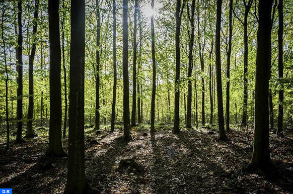 4500 arbres