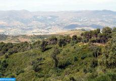 Forêt- ecology