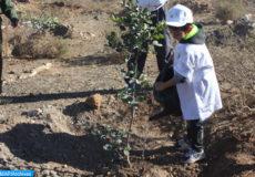 Le wali de la région de l'Oriental, Gouverneur de la préfecture Oujda-Angad, Mohamed Mhedia a lancé samedi (12/11/16)  l'opération de plantation de plus de 218.000 plants forestiers en une seule journée dans la région de l'Oriental, dans le cadre de l'initiative lancée par le Haut-commissariat aux eaux et forêts et à la lutte contre la désertification (HCEFLCD).