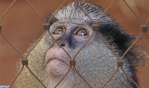 Une immersion totale dans le monde de la faune. C'est ce qu'offre le jardin zoologique de Rabat à ses visiteurs qui viennent découvrir plus de 0800 animaux répartis dans cinq écosystèmes différents