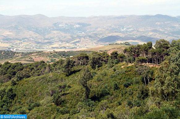 Forêt-ecology
