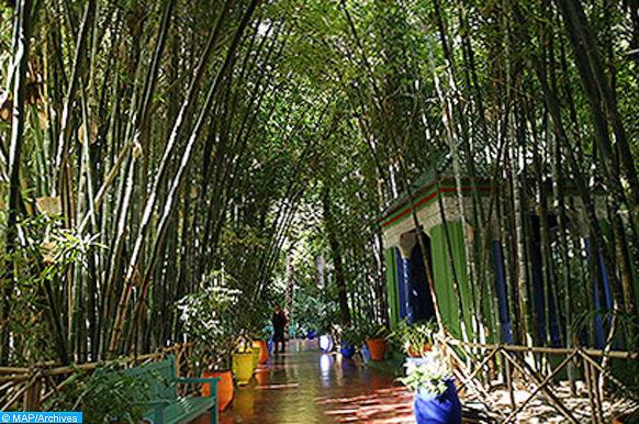 Le jardin Majorelle de Marrakech, un jardin botanique touristique d'environ 300 espèces sur près d'1 hectare (10 000 m2) (18/11/16)