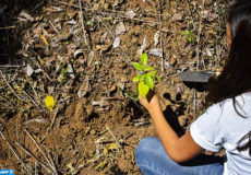 A student holds a plant during a national campaign for the reforestation of El Salvador, at ecology park Walter Deininger in La Libertad, 34 km south of San Salvador, on June 5, 2017. Central American countries with the support of Germany are working in the restoration of 7.9 million hectares of forests in order to mitigate the accelerated deterioration caused by fire, timber smuggling and climate change. / AFP PHOTO / Oscar RIVERA / TO GO WITH AFP STORY BY CARLOS MARIO MARQUEZ