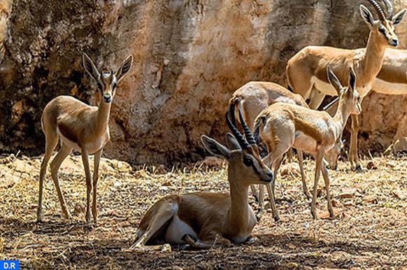 Zoo-naissances-M eco