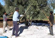 olives-504x300-2