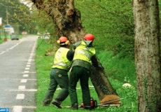des hommes procèdent, le 12 avril 1999 à Eqemauville, à l'abattage de 500 platanes qui bordent le CD 579, Pont-L'Evêque/Honfleur, à la suite de la campagne de signatures réclamant l'élimination de ces arbres, situés à un endroit où sont survenus 90 accidents graves dont 30 mortels depuis 1986. / AFP PHOTO / MYCHELE DANIAU