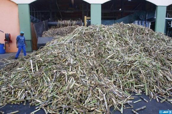 sur la biomasse