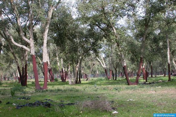Foret-ecology