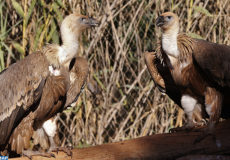 Une immersion totale dans le monde de la faune. C'est ce qu'offre le jardin zoologique de Rabat à ses visiteurs qui viennent découvrir plus de 1800 animaux répartis dans cinq écosystèmes différents