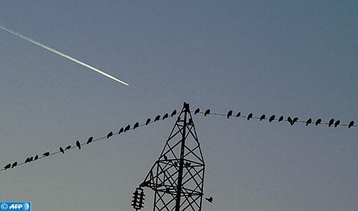 Birds sit on an electricity pylon as a aeroplane flies past in Pristina on November 25, 2017.   / AFP PHOTO / Armend NIMANI