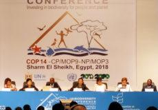 Charm El Cheikh Convention des Nations Unies diversité biologique-Ecology