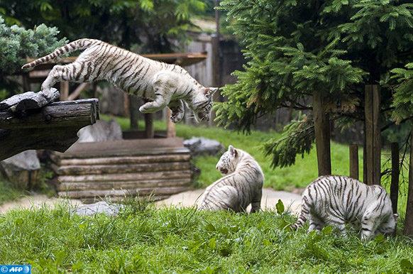 zoos de rester