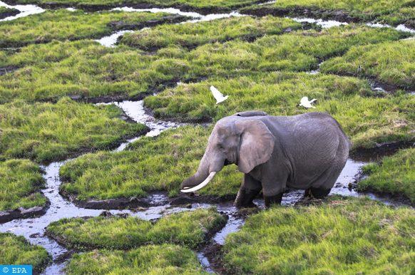 six éléphants