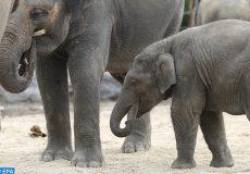 camps d'éléphants en Thaïlande