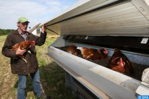 L'agriculture biologique connaît une hausse des surfaces et des substances