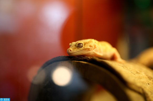 reptiles menacés d'extinction