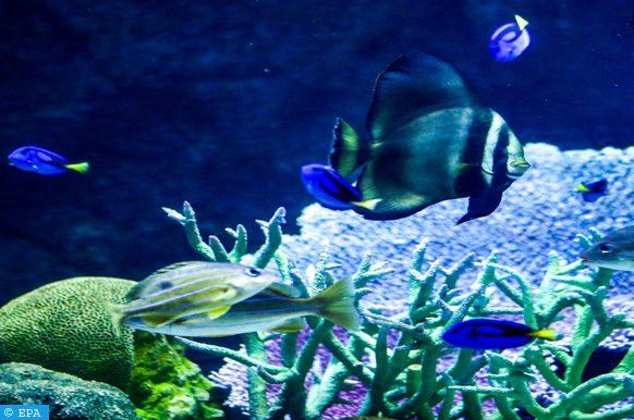 écoystèmes côtiers
