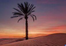 Abou Dabi Prix Photographie Palmier - ECOLOGY