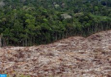 """epa01931542 (FILE) A file picture dated 28 November 2003 shows deforestation of Brazil?s Amazonian rainforest. Deforestation in Brazil?s Amazonian rainforest cut down or affected 7,000 square kilometers this year, the lowest rate in more than two decades, the Brazilian government announced 12 November 2009. """"This is by far the lowest at least since 1988,"""" when monitoring began, said Gilberto Camara, head of the National Institute for Special Investigations (INPE). The 12-month data, covering August 2008 until July 2009.  EPA/MARCELO SAYAO"""