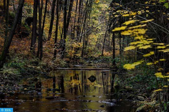 محكمة ألمانية تأمر بالوقف الفوري لإزالة غابة قرب برلين
