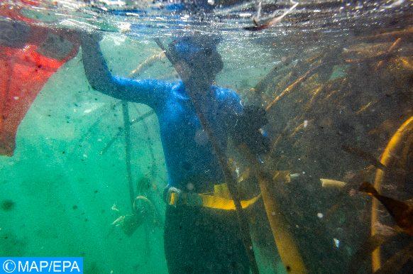 déchets marins