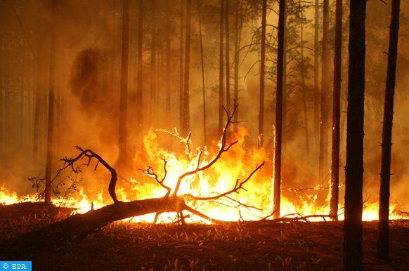 المساحات الغابوية المدمرة بغابة الأمازون بالبيرو بلغت خلال السنة الماضية 147 ألف و402 هكتار