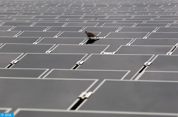 epa02769780 A pigeon walks over a sea of photovoltaic solar panels at the new Sai Sena Solar Park during the handover of the new green energy venture, at Ayutthaya, about 60 kms from Bangkok, Thailand, 07 June 2011. The three megawatt solar park feeding power into the Thai grid was designed and installed by the Hamburg-based, German company Conergy and handed over to its investors, Thai solar power company Ratchaburi Electricity and Yanhee Solar Power, who are also developing seven other solar power projects across Thailand. Thailand aims to have 20 per cent of its total energy production from renewable sources by 2020 and this farm will help Thailand avoid at least 1,971 tons of green house gasses annually.  EPA/BARBARA WALTON