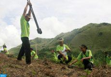 planter un million d'arbres