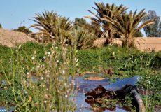 """Tenue, samedi (02/03/19) à Zagora, d'une conférence sous le thème """"Khettaras dans l'oasis Ferkla à Tafilalet : menaces et mécanismes de préservation"""" en marge du 6è Forum international des oasis et du développement durable."""