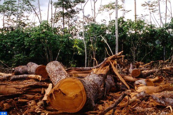 10_logging_deforestation22-copier