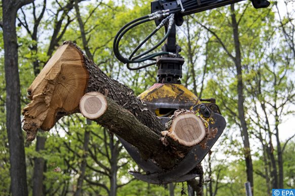 conatiners de bois précieux