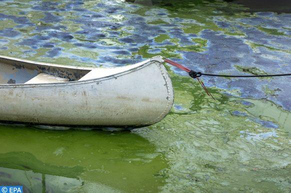 algues bleu-vert