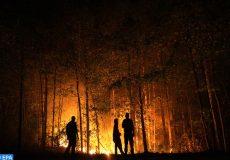 les feux de forêt