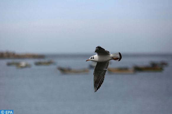 epa04079507 A seabird flies at the port during rain in Gaza City, 15 February 2014. Rain was forecast in the region over the weekend.  EPA/MOHAMMED SABER