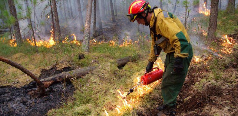 dommages des feux de forêts en Russie