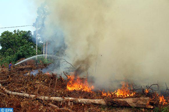 des milliers d'hectares de foêts ravagés par le sfeux en Indonésie
