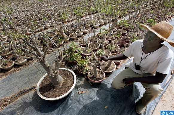 plants à Kaffrine