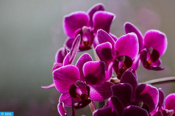 orchidées de Colombie