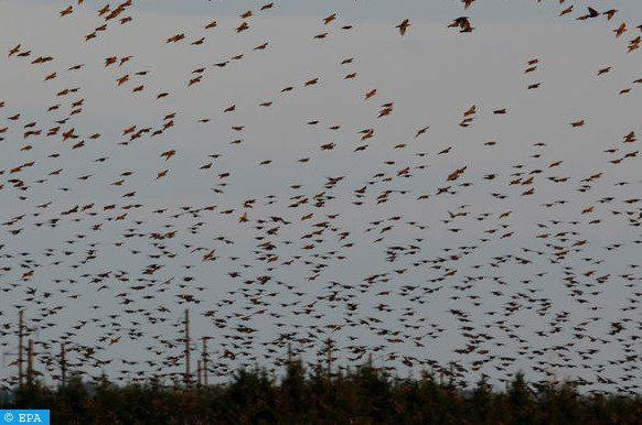 oiseaux sauvages