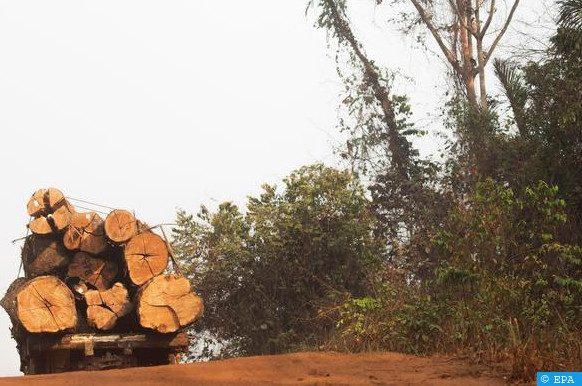 l'industrie forestière