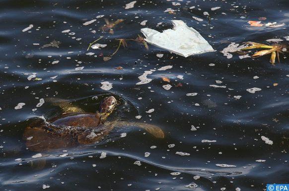 Oceana appelle à réduire le plastique