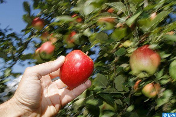 salon national de la pomme