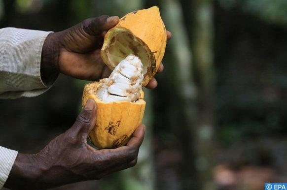 La Côte d'Ivoire et le Ghana optent pour un prix plancher en faveur des planteurs du cacao